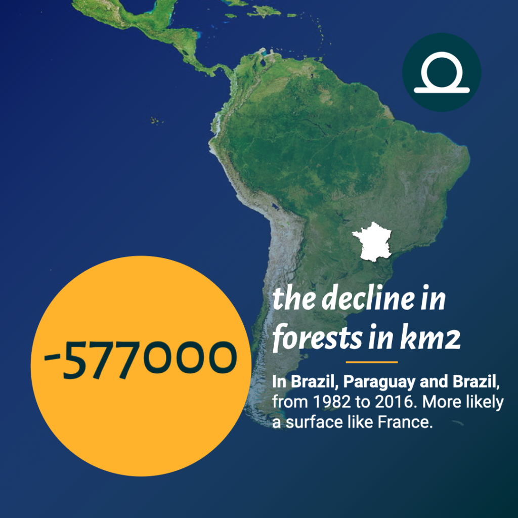 The decline in forests in south america